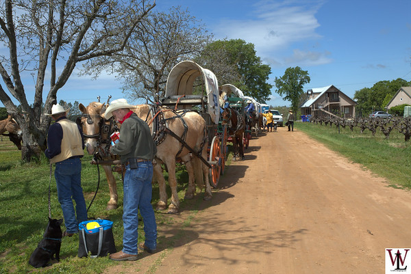 2017 49er Wagon Train