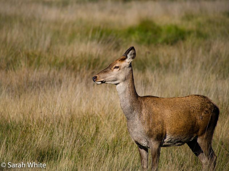 Deer rut_260915_537.jpg