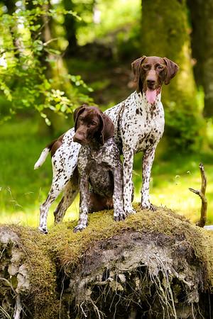 Dog Portrait Shoot - Jodie Moffat