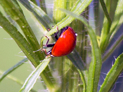 .. and another Ladybug