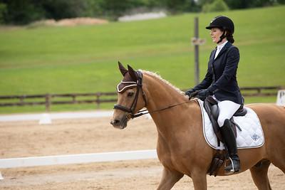 Horse 384