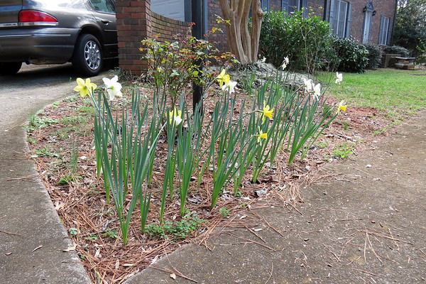 February 24:  More color starts to appear .  .  .