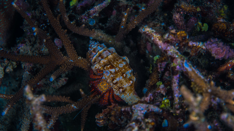 Taken at Pantai Falajawa divesite in Ternate Island, North Maluku, Indonesia during our 8D7N excursion in March 2018