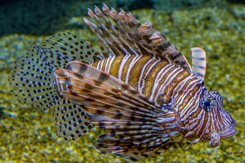 GA Aquarium with Linc, Ali & Abe-21.jpg