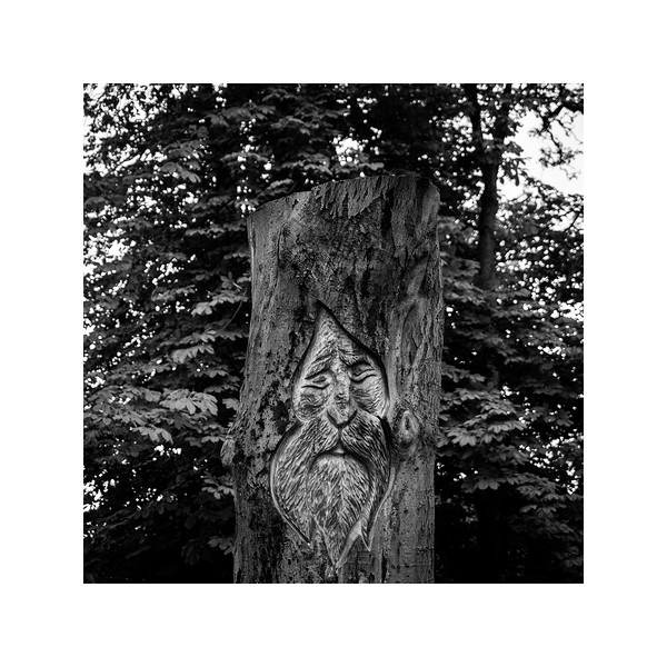 237_TreeArt_10x10.jpg