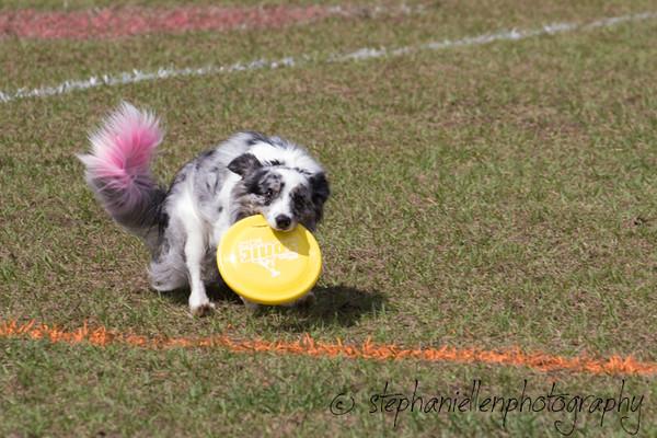 _MG_2972Up_dog_International_2016_StephaniellenPhotography.jpg