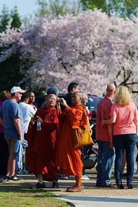 2012 DC Cherry Blossoms