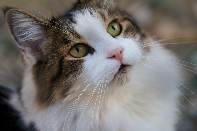 Cat1 (1).jpg