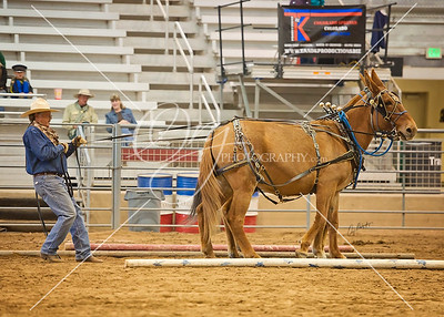 2015 Colorado Classic Mule and Donkey Days