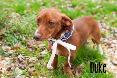 QAC Adoptable Pets-November