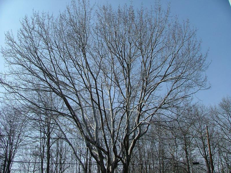more tree