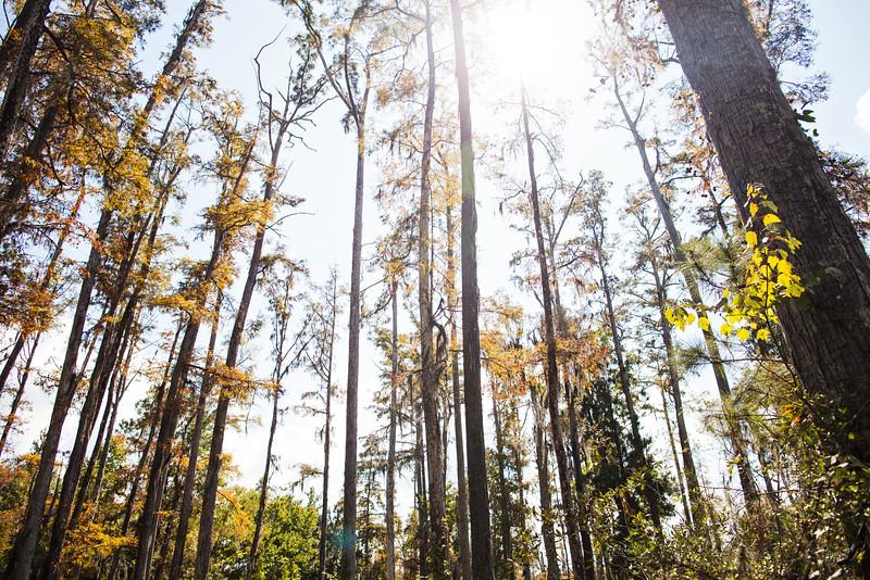 cypress-gardens-7.jpg
