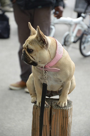 Cute Puppy - Seattle Waterfront