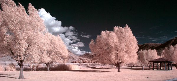 Infrared Photography II