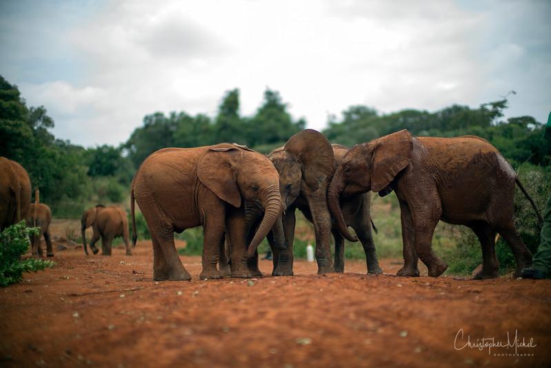 Aug312013_nairobi_blixen_elephant_m9_2839.jpg