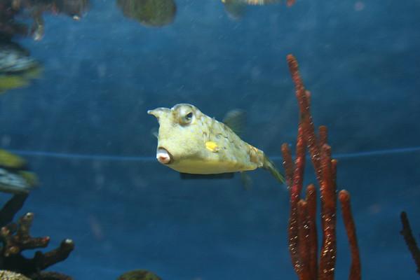 Baltimore Aquarium 6/08