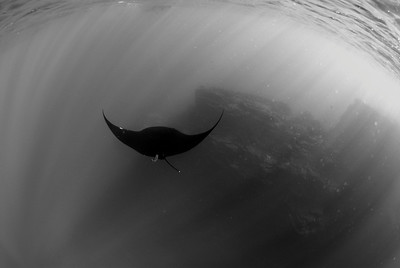 Islas Revillagigedo: Images from the Socorro Islands