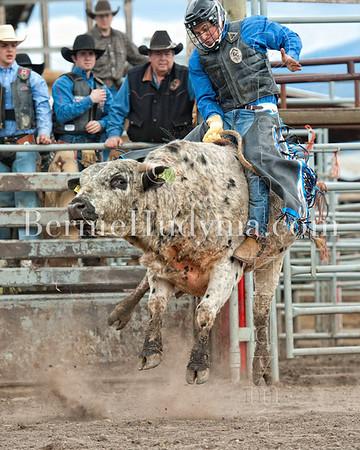 Coyote Creek Rodeo Bulls- 2012