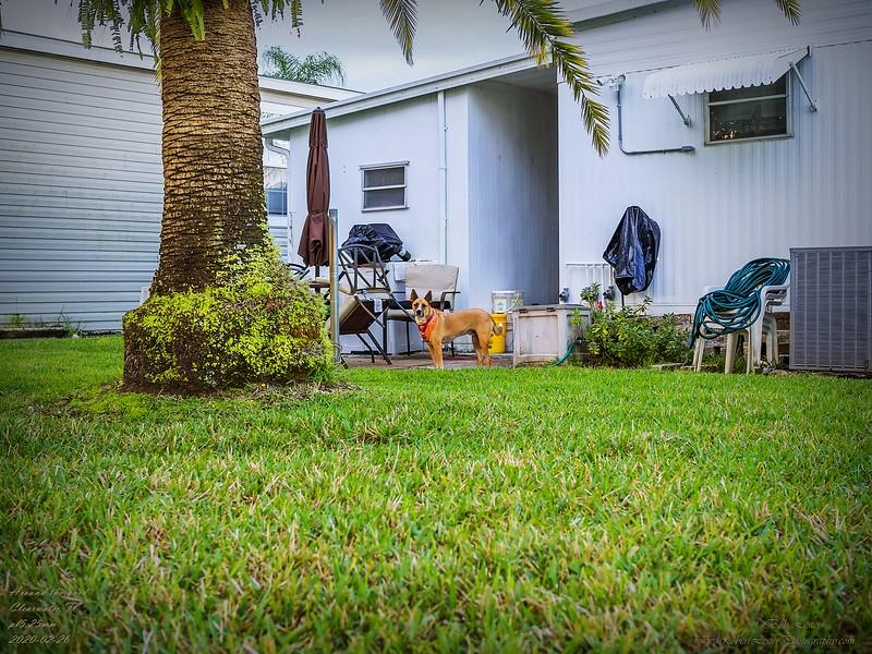 _2260033_pl5 25mm1.8 around the house.jpg