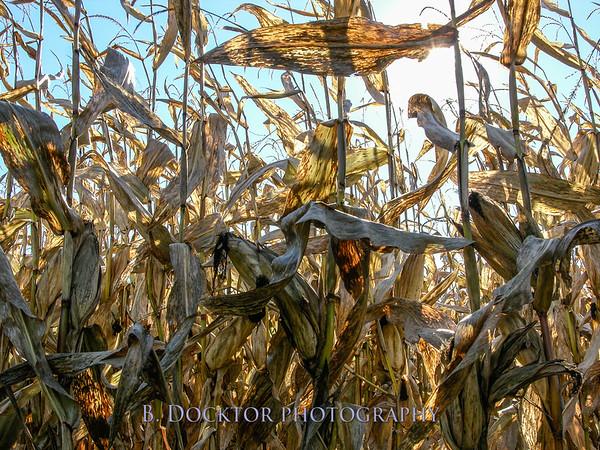 LOCAL FARMS HUDSON VALLEY