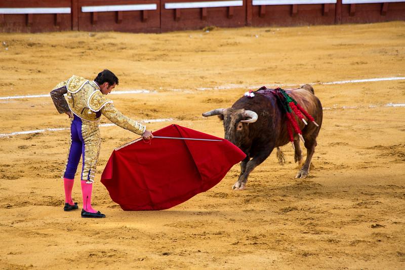 Bullfight16.jpg
