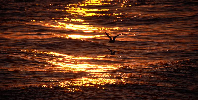 b__DSC1627_sunsetbirds.jpg