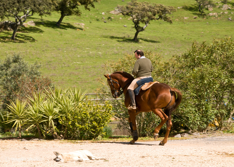 Wed 3/16 at the horse-breeding farm: Maria's son on horseback and the dog napping in the driveway