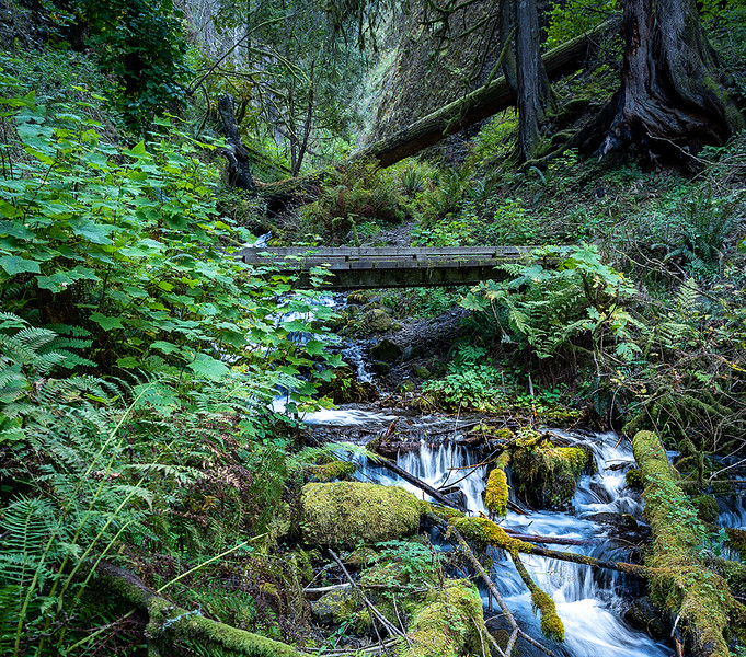 Wahkeena Creek-1855.jpg