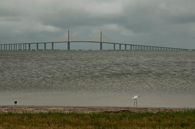 Birds & Bridges