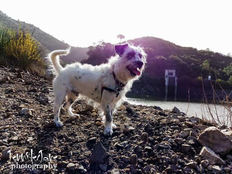 182_walks_with-monty_2016-110414.jpg