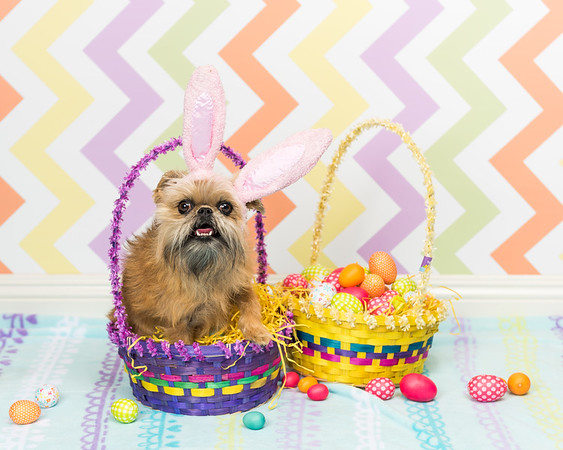 BARK Easter Photos at WAG - 19.03.2016