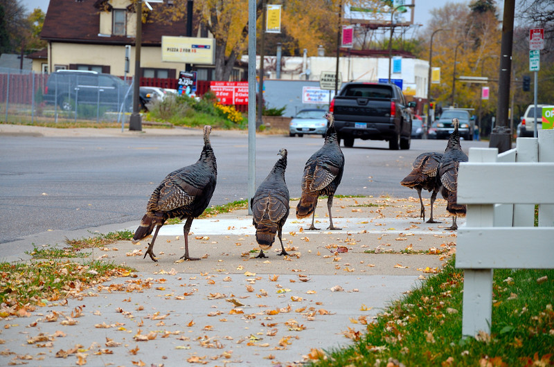 Turkey's In MPLS_047.JPG