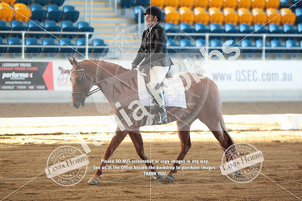 QLD QH State Show 2015