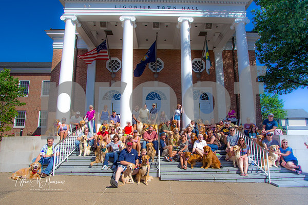 Golden Gathering at Paws on Main