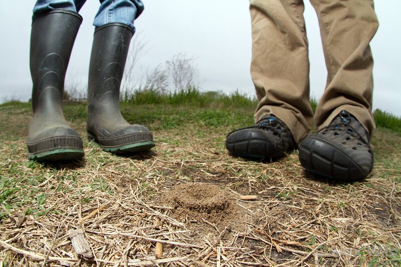 Myrmecologists overlook a nest of a soil-dwelling ant, Dorymyrmex bureni. Note the practical footwear for muddy conditions.  Gainesville, Florida, USA