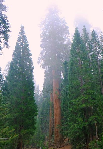 California Day 6 Sequoia 05-30-2017 126.JPG