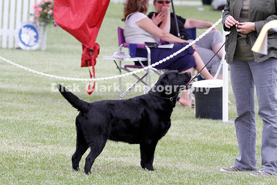 Saturday - Bred-by-Exhibitor Dog