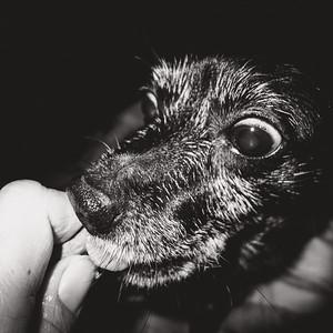 Blacky - Gierig