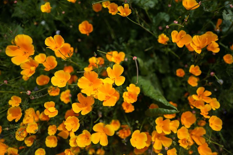 Spring Flowers A-86.jpg
