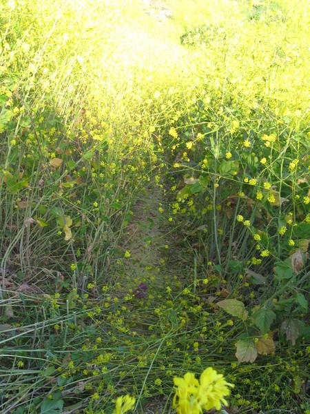 20080417006-New Millenium Trail, trailwork.JPG