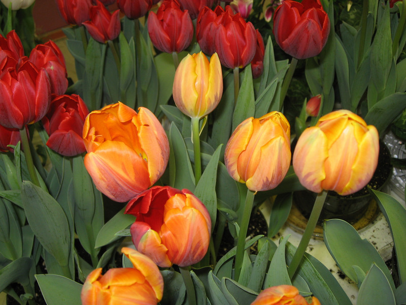 Easter 2011 053.jpg