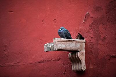 Street color, San Miguel de Allende, Mexico
