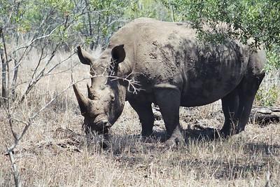 Swaziland October 2003