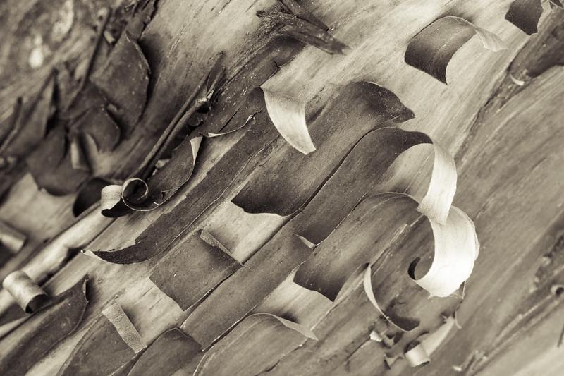 Manzanita peel-1.jpg