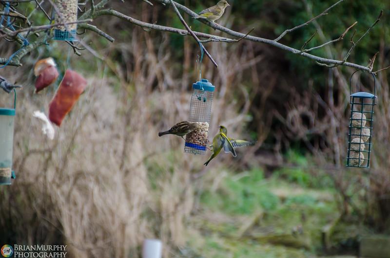 Birds 050218-6.jpg