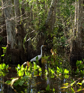 Florida March 2010