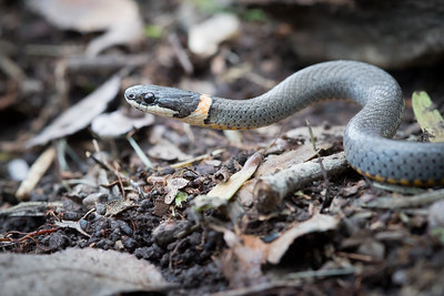 Herpetology (Reptiles and Amphibians)
