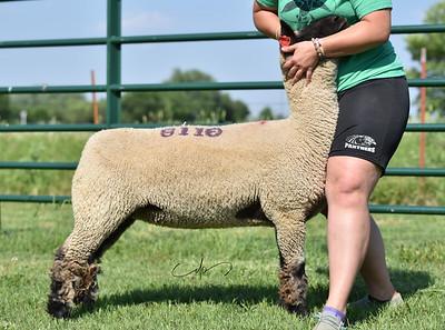 NOC Sheep Center