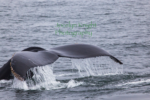 Oceanic Society Whale Watch 7/26/2019
