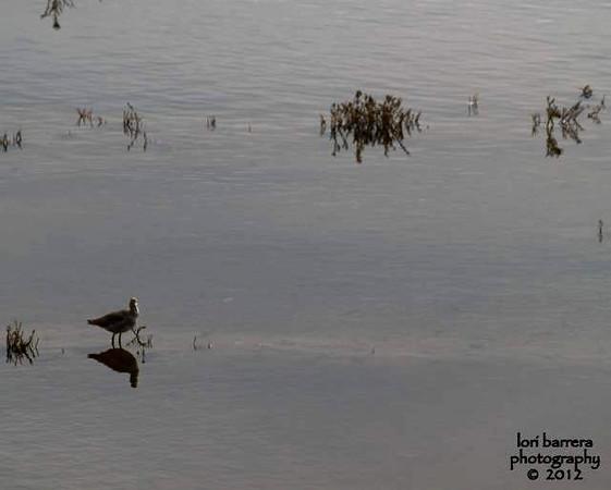 Barrera 3  8x10 a.jpg